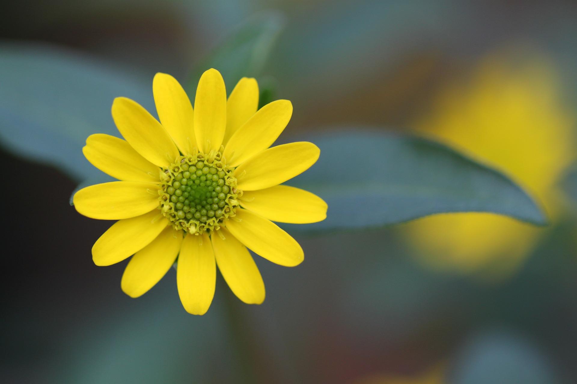 blossom-247409_1920.jpg